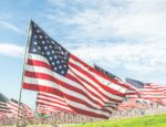 A field of American flags on a sunny day.